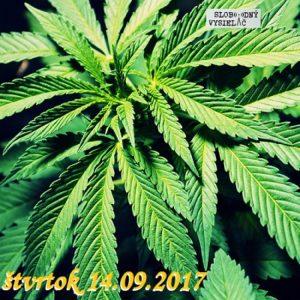 Konvergencie 20 (Marihuana)