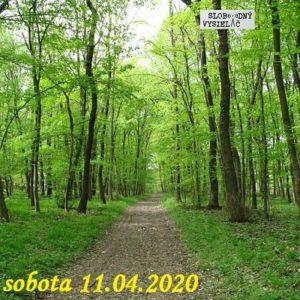 Volanie lesa 29