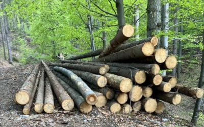 Lesy treba chrániť ústavou, no tiež priniesť rovnováhu, ktorá prinesie spokojnosť všetkým, hovorí OZ Moje Slovensko.