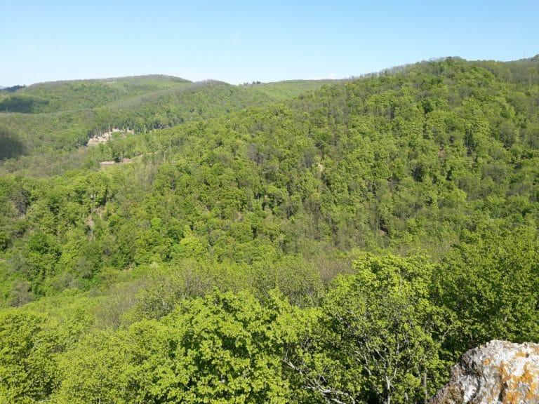 Obmedzujú vlastnícke práva a nemajú pre urbárov peniaze, kritizujú vlastníci súkromných lesov štátne orgány. 1