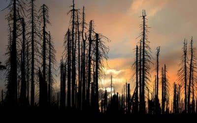 Krutá pravda o kůrovci. Kdo nechal umřít naše lesy. Zločinci v převleku za ochránce. Škody v řádech bilionů! Smrkům hrozí zkáza. Exkluzivní rozhovor se známým soudním znalcem.
