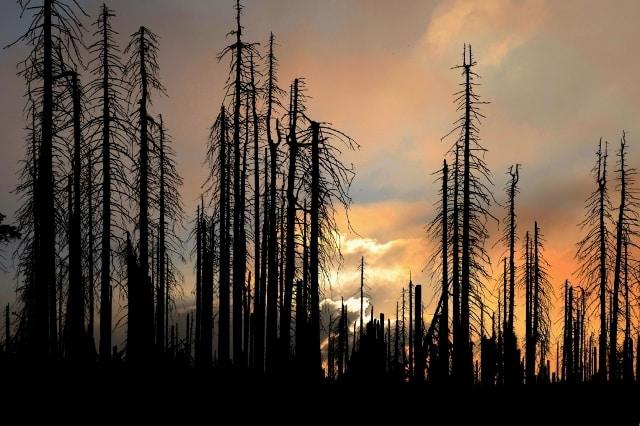 Krutá pravda o kůrovci. Kdo nechal umřít naše lesy. Zločinci v převleku za ochránce. Škody v řádech bilionů! Smrkům hrozí zkáza. Exkluzivní rozhovor se známým soudním znalcem. 1